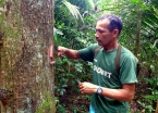 Our guide Ananias showing us one of the many medicinal trees in the Amazon.