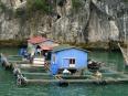 Fishing farmhouses, Lan Ha Bay.  I feel sorry for the dog!