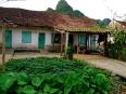Village home with green garden on Cat Ba Island, Vietnam.