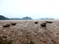 Low tide on Cat Ba Island, the reed fishing boats idle this time of the day.