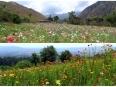 Flower farms along the rising path