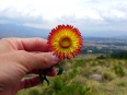 Stopping for a rest above the Cochabamba Valley, there wasn't much sunshine today but the flower from fields made up for it