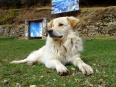 Canine Islander: this beautiful dog seemed perfectly at ease living the good life on Island of the Sun