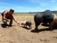 Peter feeding a piglet on the shores of Lake Titicaca.  Crazy for cacahuetes, this little one LOVED peanuts!