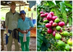 At the local farm with the friendly coffee roaster, I even picked some of the red & ripe beans