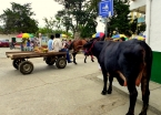 San Agustín's roads on market day seem to have more animals than motor vehicles
