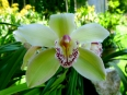A bloom in the orchid garden