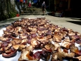 Drying mushrooms in Sapa, Vietnam.  These are used in medicinal rice wine infusions