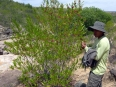 My excellent guide José showing me plants still used by locals as age-old natural medicine