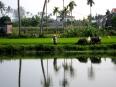 Farmer and water buffalo along the Thu Bon River outside of Hoi An