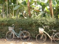 Idle bicycles in a village across the Thu Bon River from the Hoi An peninsula