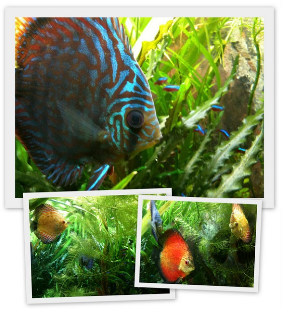 Peixes de Wolfgang