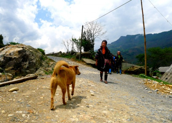 Canines crowd the Vietnamese mountain roads... this one happens to be awake