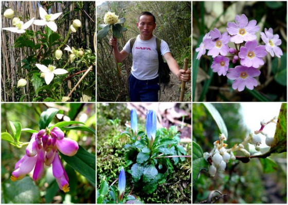 Mountain Bloom: Despite the end of the dry season in Vietnam, color was ever present on the way to Mt. Fansipan
