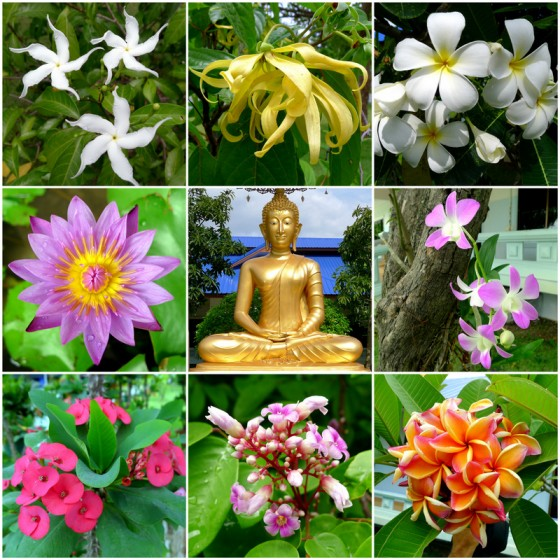Blooms around the Buddha at the meditation retreat