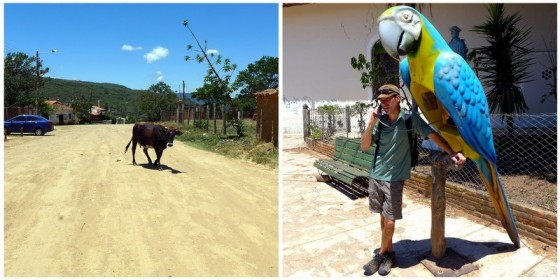 The quiet streets of Samaipata: wandering cows, unpaved roads and the parrot phone booths