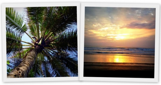 Palm trees and Pacific sunsets... very little to complain about in Canoa!