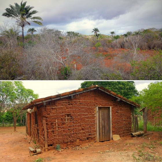 The unforgiving sertão scrubland offers little but hardship to local residents ~ Rustic pau-a-pique (stick and adobe) homes can still be seen in the harsh sertão landscape